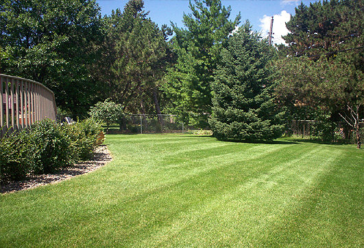 Rockford Lawn Mowing Services